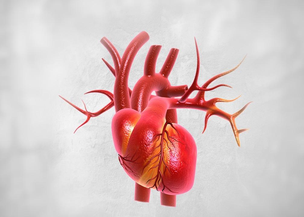 počítačová grafika srdca s priľahlými cievami