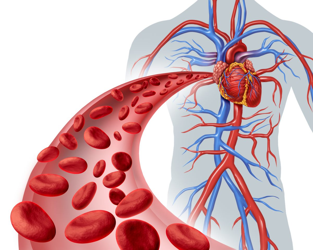 ilustrácia krvného obehu a srdca